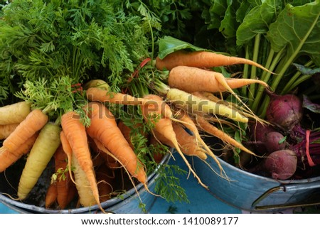 Fresh carrots for sale at a farmers market #1410089177