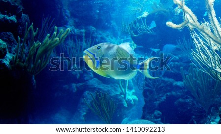 fish on the reef, coral reef, blue reef, fish underwater #1410092213
