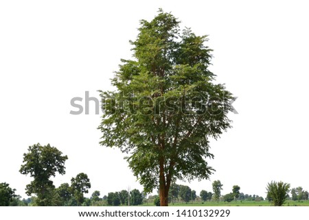 Isolated tree on white background #1410132929