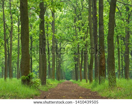 green forest and path in the park in spring day #1410439505