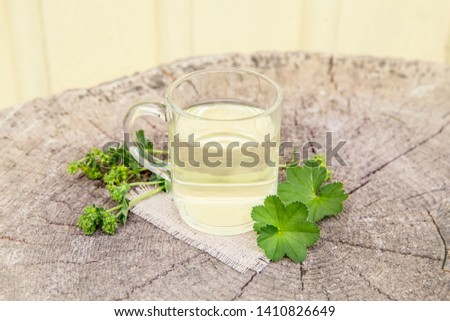 Alchemilla vulgaris, common lady's mantle medicinal herbal tea concept. Composition on natural wooden background. #1410826649