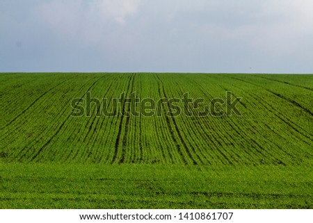Field. Green field. Plowed field. Sowed field. #1410861707