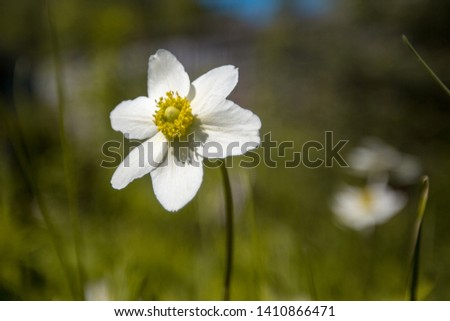 flower with white petals on a green background #1410866471