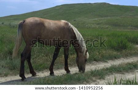 Horse grazing on a walk #1410952256