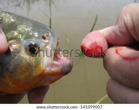 Small fishing accident, Piranha has bitten my fingertip, Amazon, Brazil