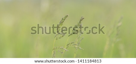 Subtle meadow background. Soft focus image with shallow depth of field of wild meadow grass, pastel vintage colors of old photo style. Cool summer nature background.