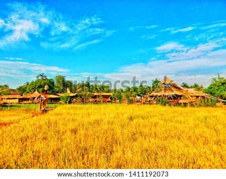 Golden rice paddies, beautiful sky clouds #1411192073