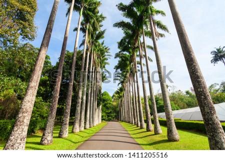 Peradeniya Royal Botanic Gardens located near Kandy city, Sri Lanka. Peradeniya Royal Botanic Gardens are the largest of the botanical gardens of Sri Lanka. #1411205516