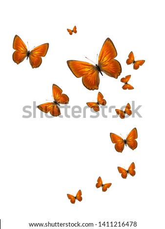 tropical flock of flying colored butterflies isolated on white background #1411216478