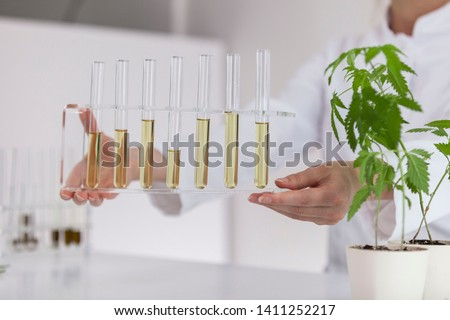 Female scientist holding a glass bowl with cbd oil extracted from a marijuana plant. Healthcare pharmacy from medical cannabis.There is a medical marijuana plant on the table. #1411252217