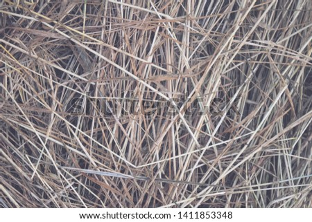 Hay Background, Hay Wallpaper, Hay Background Macro Nature #1411853348