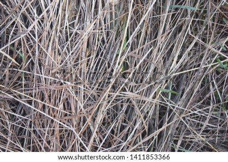 Hay Background, Hay Wallpaper, Hay Background Macro Nature #1411853366