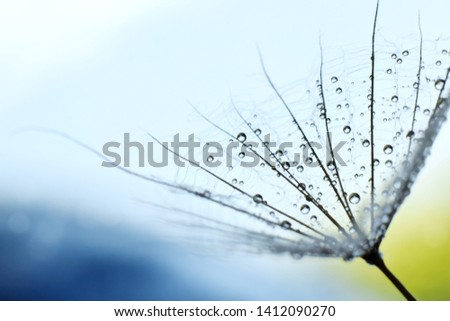 dandelion seed or goats bread flower seed against a light on blue sky #1412090270