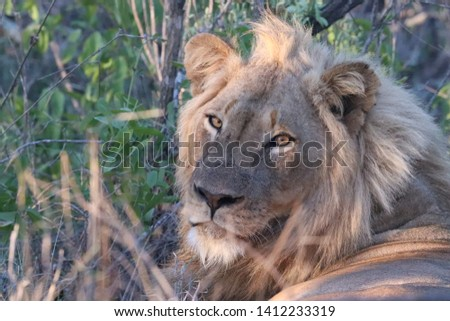 South Africa Wildlife Pictures Kruger National Park