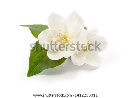 Jasmine flowers isolated on white background #1412253311
