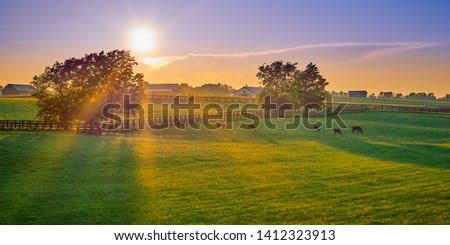 Thoroughbred horses grazing at sunset in a field. Royalty-Free Stock Photo #1412323913