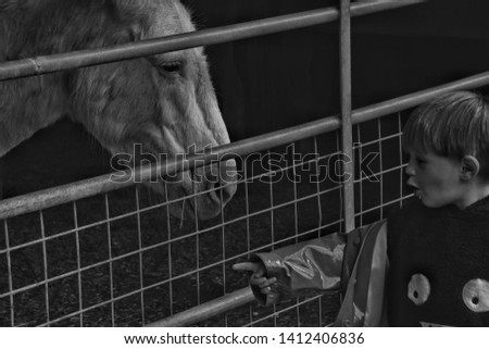 Small boy and horse. Hillside animal sanctuary, West Runto, Norfolk, 30 May 2019. editorial #1412406836