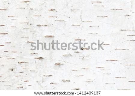 pattern of birch bark with black birch stripes on white birch bark and with wooden birch bark texture #1412409137