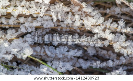 Texture background, pattern. Frost on the sprigs of grass. a deposit of small white ice crystals formed on the ground or other surfaces when the temperature falls below freezing. #1412430923