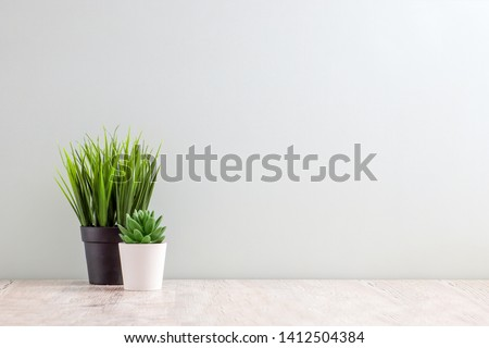 Collection of various cactus and succulent plants in different pots. Potted cactus house plants on white shelf against white wall. #1412504384