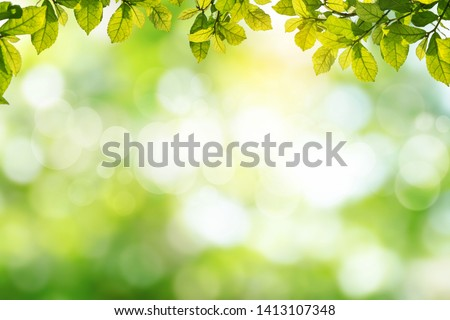 Fresh and green leaves green bokeh on nature abstract blur background green bokeh from tree.Mock up for display.  montage of product,Banner or header for advertise on social media,Spring and Summer. #1413107348