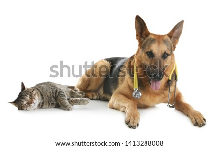 Cat and dog with stethoscope as veterinarian on white background #1413288008