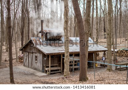 New Carlisle IN USA, March 17 2019;a sugar shack spews out stream as inside, people boil maple tree sap and turn it into maple syrup and maple sugar #1413416081