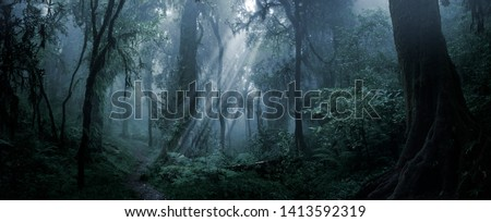 Deep tropical jungle in darkness Royalty-Free Stock Photo #1413592319