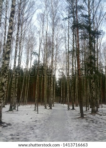 nature trees winter snow forest #1413716663