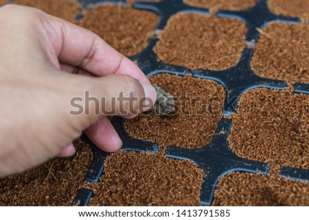 Man's hand planting seeds in soil in nursery tray  #1413791585