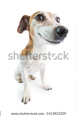 Adorable funny smiling dog. White background. Don't worry be happy attitude. positive emotions behavior #1413822209