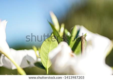 Stilllife plant on sunny day 1 #1413987203