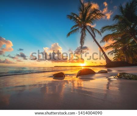 Tropical beach in Punta Cana, Dominican Republic #1414004090