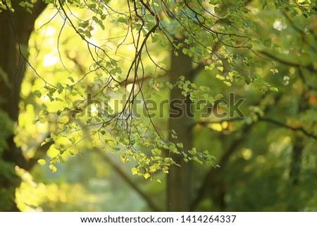 summer park background / nature trees green leaves, abstract background summer view #1414264337