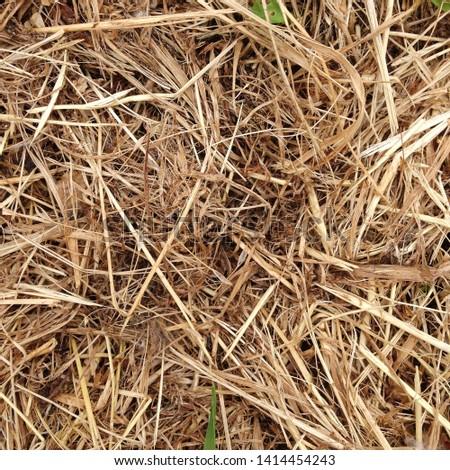 Macro photo nature dry hay. Texture background dry Wheat Straw. #1414454243