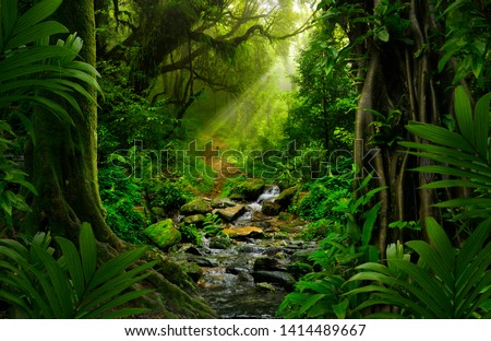 Southeast Asian rainforest with deep jungle Royalty-Free Stock Photo #1414489667