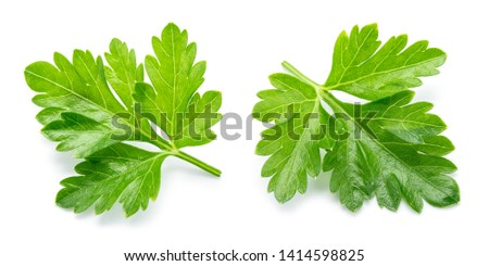 Parsley. Parsley isolated. Top view. Full depth of field. #1414598825