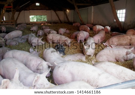 a lot of pigs share the place in the pigsty #1414661186
