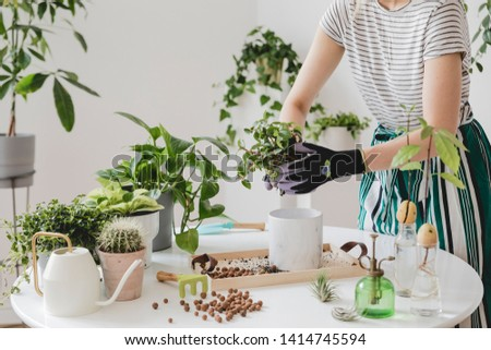 Woman gardeners transplanting plant in ceramic pots on the white wooden table. Concept of home garden. Spring time. Stylish interior with a lot of plants. Taking care of home plants. Template. #1414745594