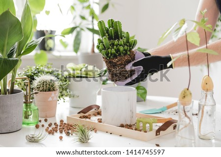 Woman gardeners transplanting cacti in ceramic pots on the white wooden table. Concept of home garden. Spring time. Stylish interior with a lot of plants. Taking care of home plants. Template. #1414745597