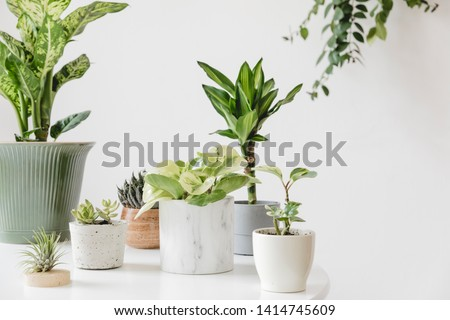 Stylish and botany composition of home interior garden filled a lot of plants in different design, elegant pots on the white table. White backgrounds walls. Green is better. Spring blossom. Template. #1414745609