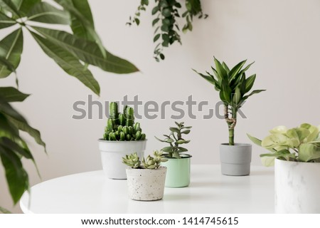 Stylish and botany composition of home interior garden filled a lot of plants in different design, elegant pots on the white table. White backgrounds walls. Green is better. Spring blossom. Template. #1414745615