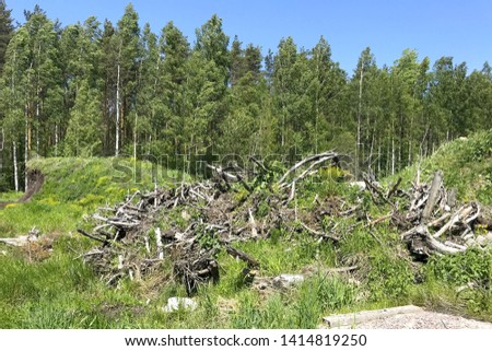 A pile of old dry snags lies on a meadow on the background of a green forest and blue sky on a sunny summer day #1414819250