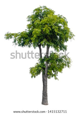 Beautiful tree isolated on white background. Suitable for use in architectural design or Decoration work. Used with natural articles both on print and website. #1415132711