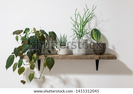 Collection of beautiful tropical plants on wooden shelf Royalty-Free Stock Photo #1415312045