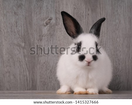 Black and white cute rabbit on wood table. White and black dot on face rabbit. funny rabbit #1415327666