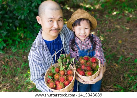 close up asian children, asian gardener family harvest organic rambutan fruit in farm, they feeling happy in family time, child learning and development, father day #1415343089