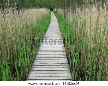 Wooden boardwalk in tall reeds in the Western Pomerania Lagoon Area National Park, Germany Royalty-Free Stock Photo #141536605