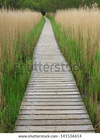 Wooden boardwalk in tall reeds in the Western Pomerania Lagoon Area National Park, Germany Royalty-Free Stock Photo #141536614