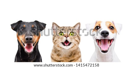 Portrait of two cute dogs and funny cat isolated on white background Royalty-Free Stock Photo #1415472158